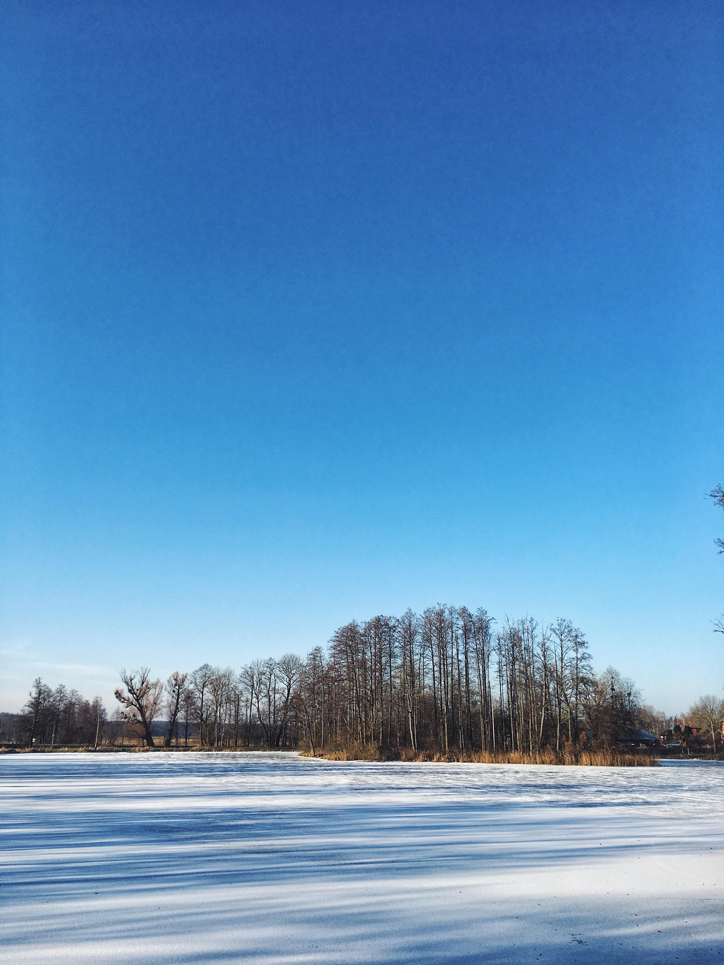 Białowieża zimą