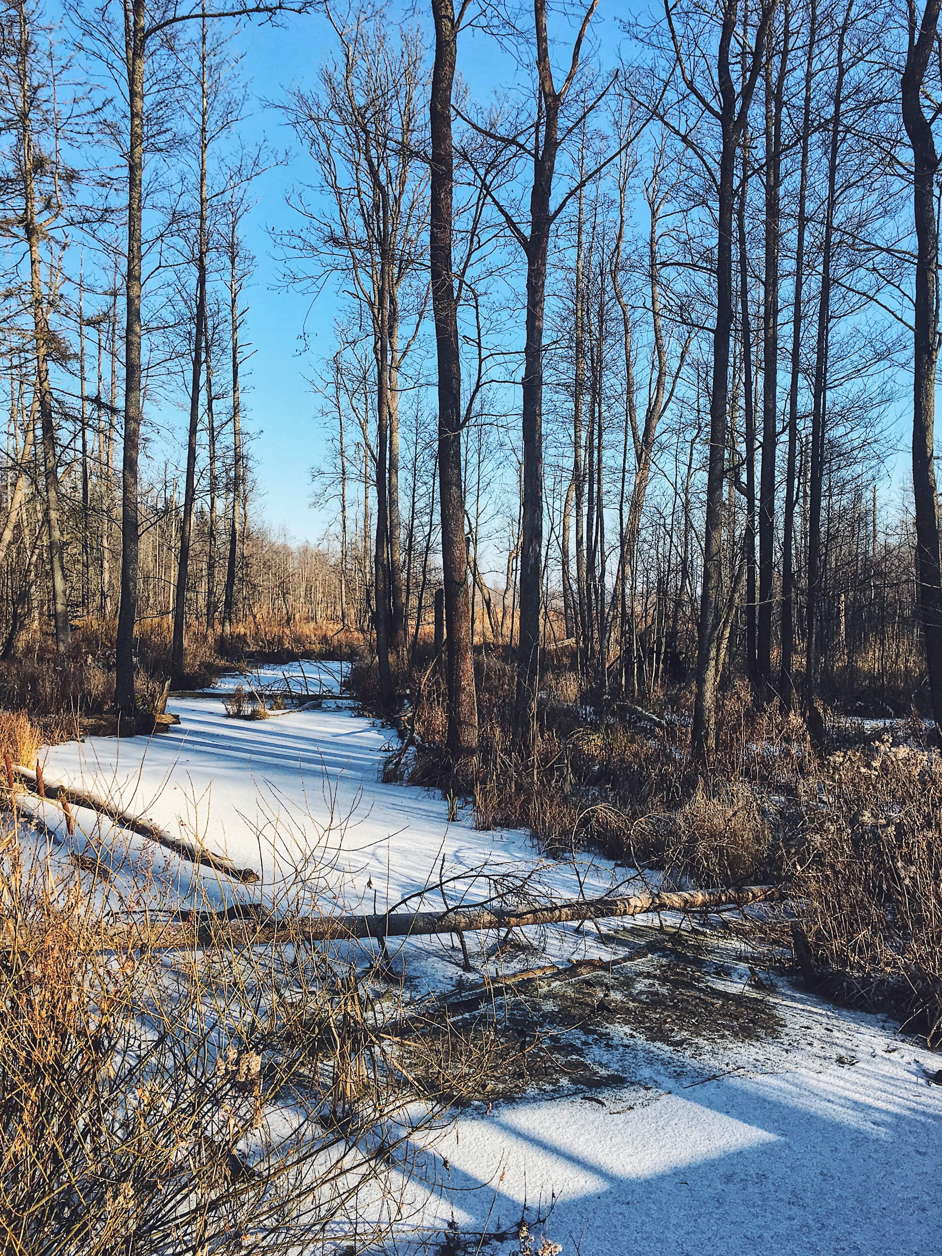 Piękna Puszcza Białowieska zimą