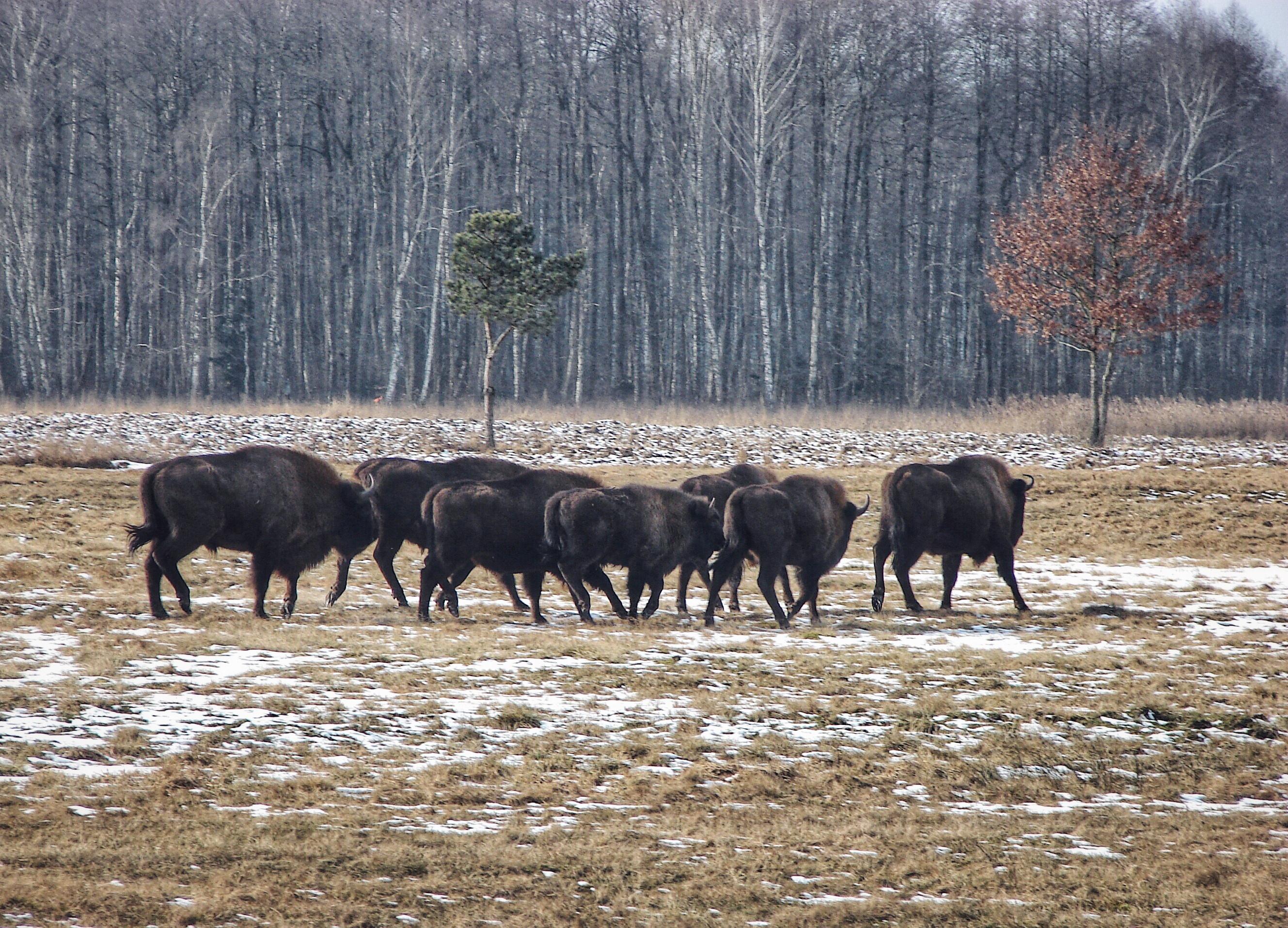Podlaska wieś zwierzęta