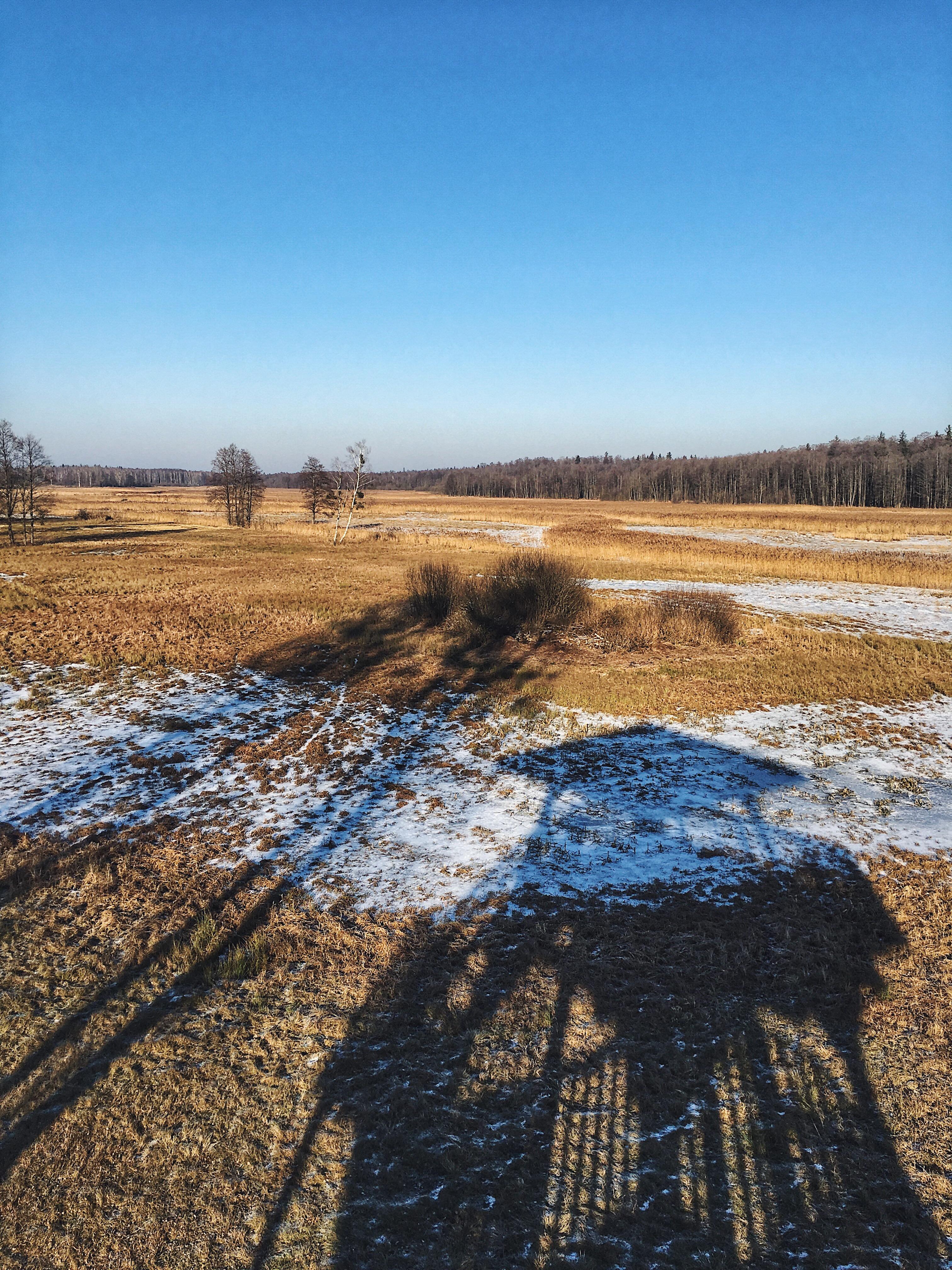 Taras widokowy Białowieża