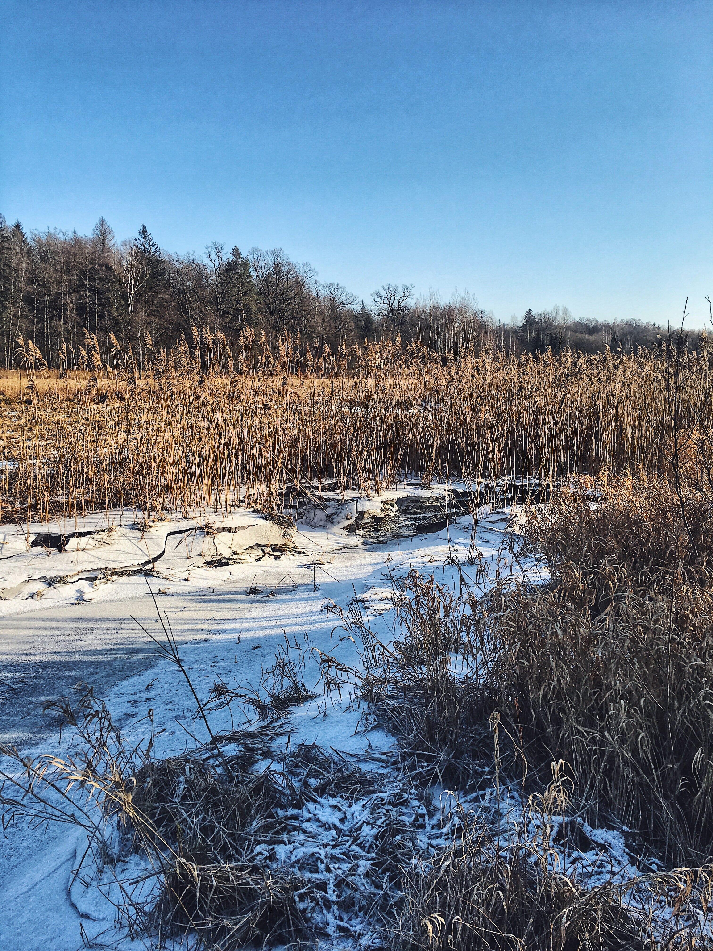 Zima w Puszczy Białowieskiej