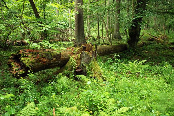 Park Narodowy Puszcza Białowieska
