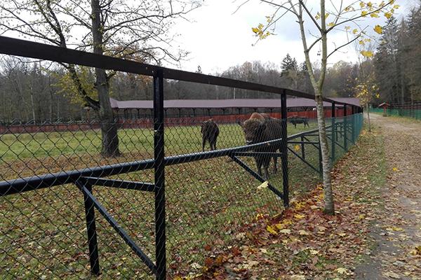 park pokazowy zwierząt Puszcza Białowieska