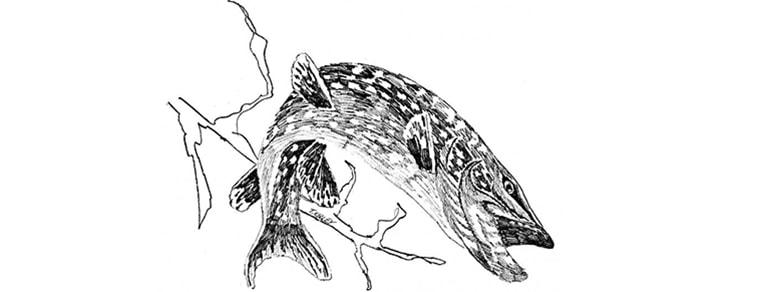 szczupak zalew siemianówka