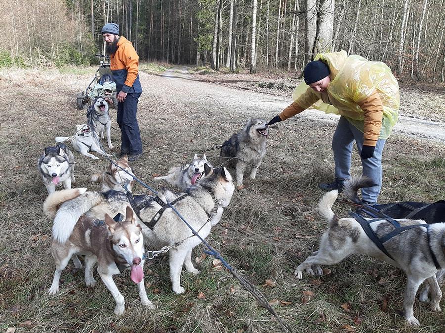 psie zaprzęgi wycieczka