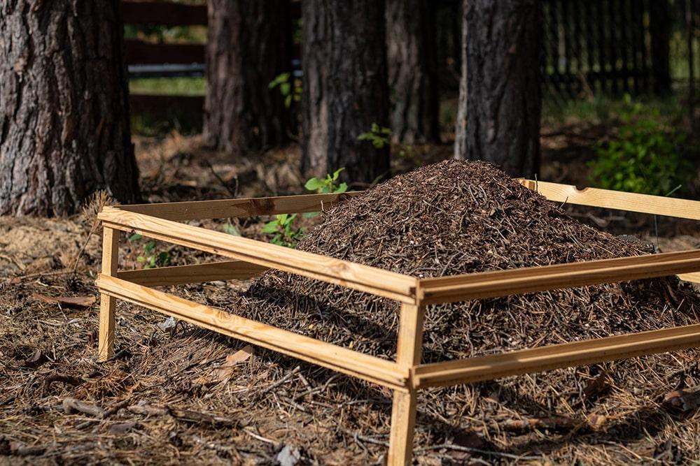 zalew siemianówka mrowisko
