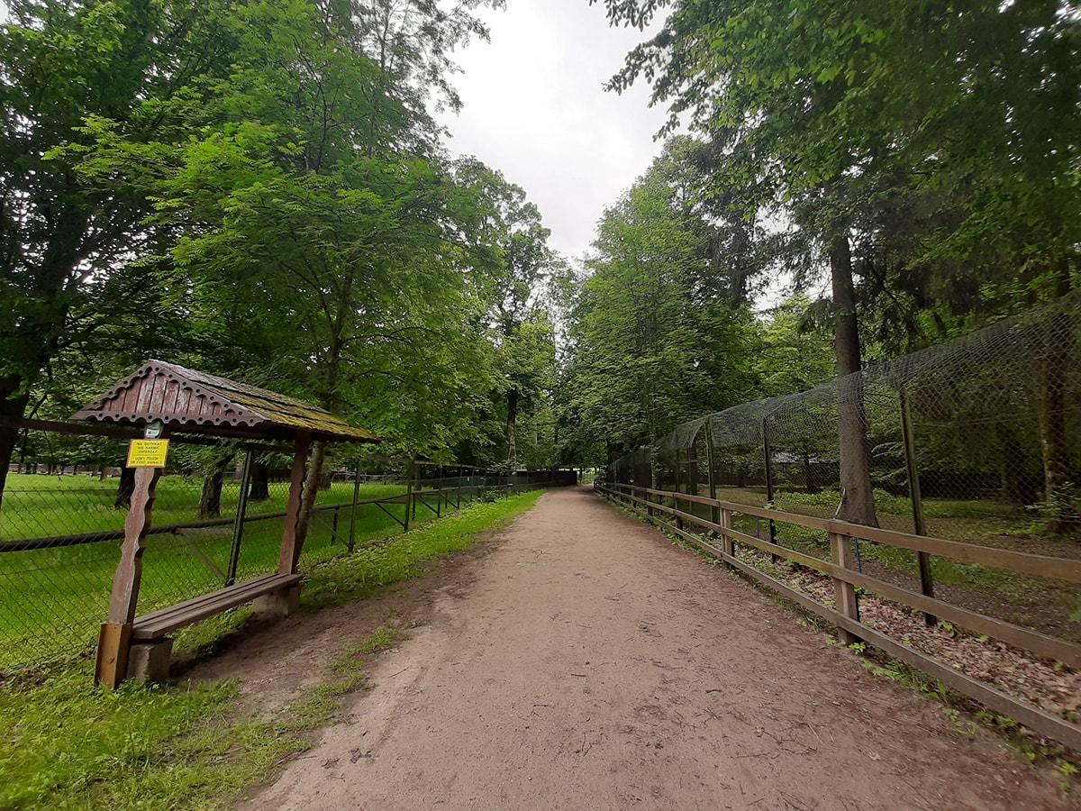 park pokazowy żubrów białowieża