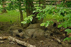 park pokazowy żubrów