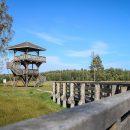 wieża orłów widokowa puszcza białowieska