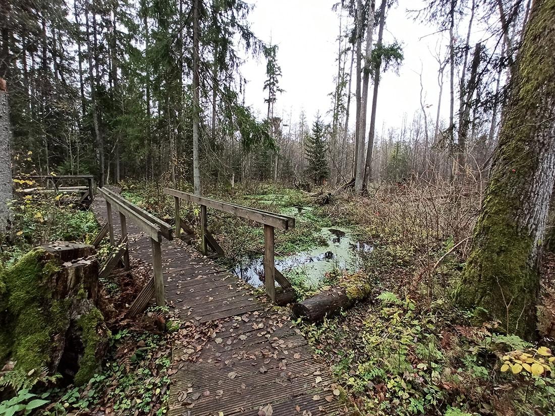 rezerwat przyrody krzemianka